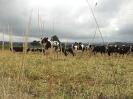 mellor-granxa-sep-2013
